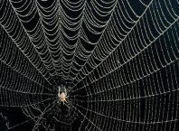 Yapay Örümcek İpliği Nedir?